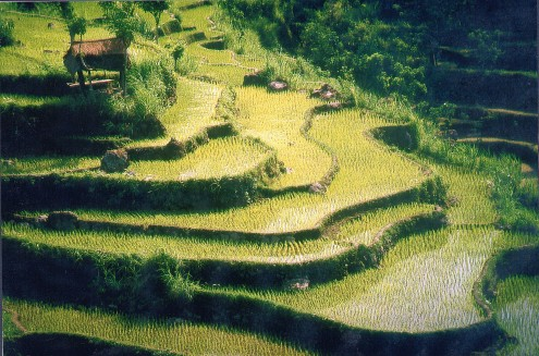 Bali Subak farming world-heritage listed by UNESCO