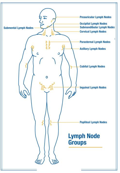 Lymph drainage nodes